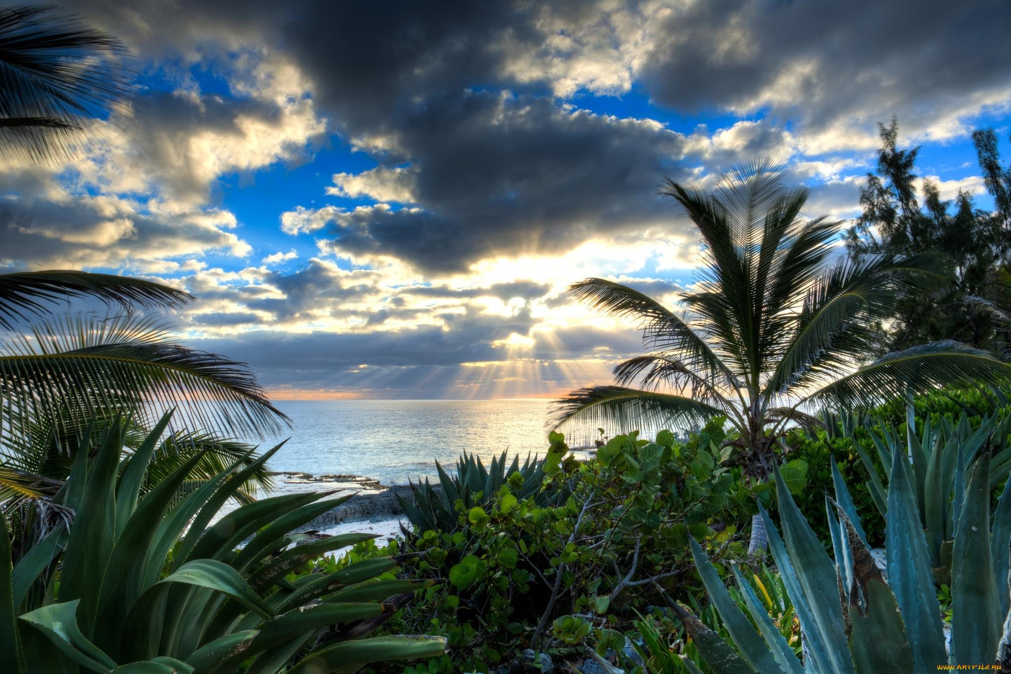 фото пальмы высокого качества уже
